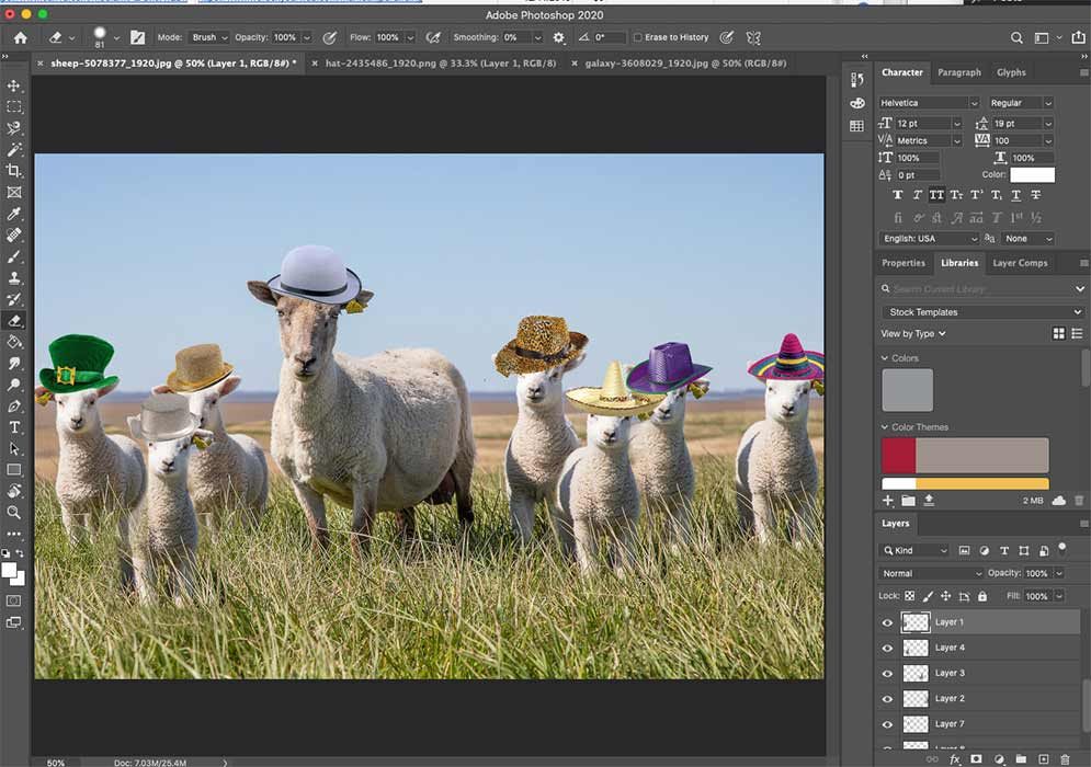 Sheep in pasture with hats on editing on Photoshop
