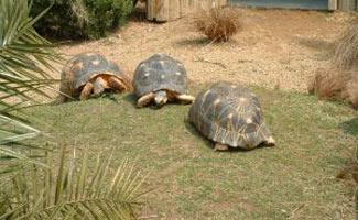 Turtles on grass